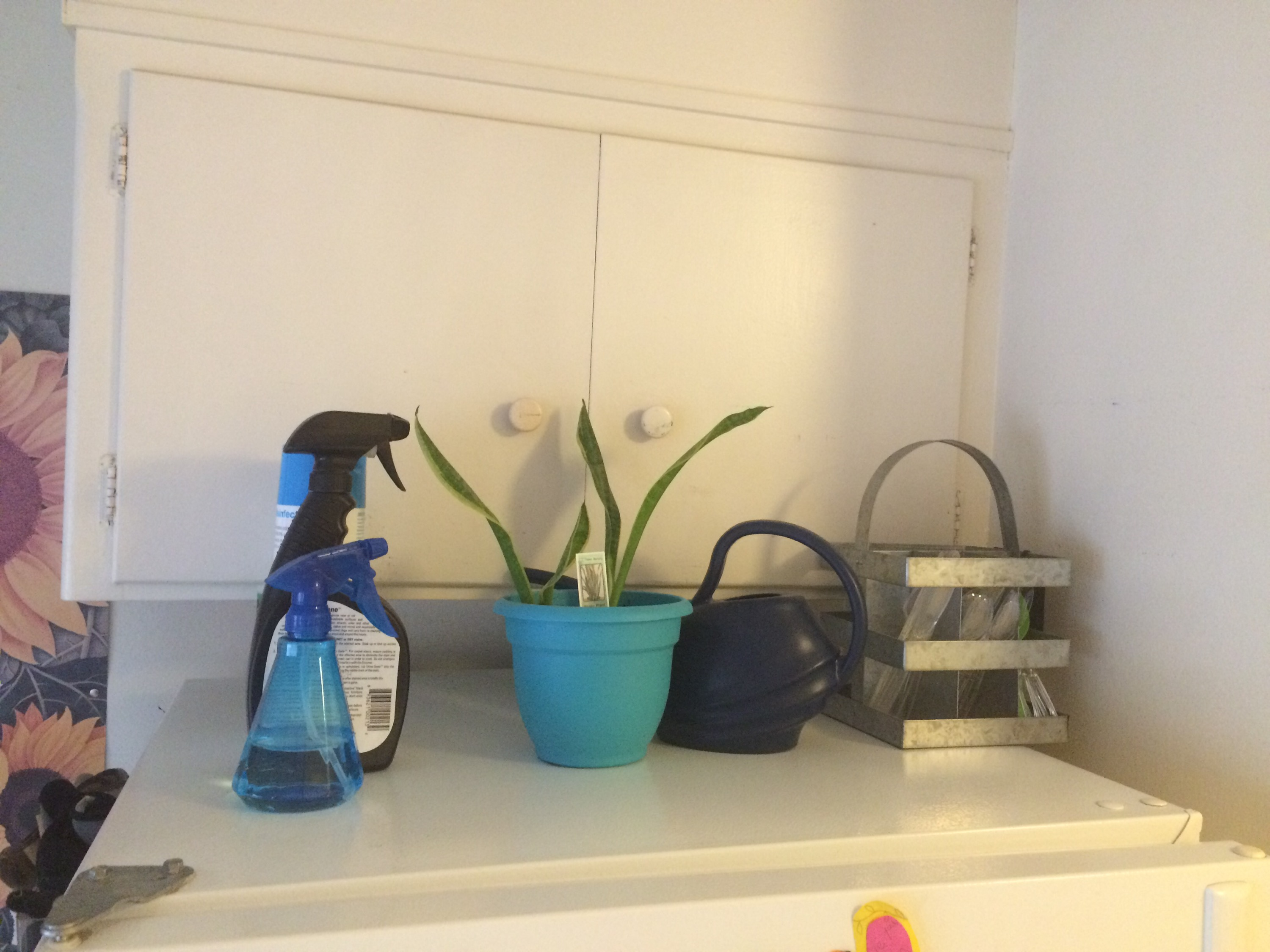 2015 Great Summer Purge and Clean: The Kitchen
