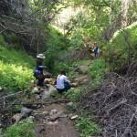 Exploring the creek along Dead Man's Falls